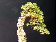 Hỗn Hợp Đất Trồng Bonsai